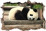 Pixxprint 3D_WD_S1052_92x62 Niedlicher Junger Panda Liegend auf Baumstämmen Wanddurchbruch 3D Wandtattoo, Vinyl, Bunt, 92 x 62 x 0,02 cm