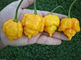 PLAT FIRM Germinazione dei semi PLATFIRM- (20) semi gialli Trinidad Scorpion Moruga Pepper