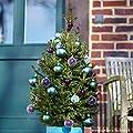 Kleine Fichte 'Little Santa®' - Picea abies - Nachhaltiger Weihnachtsbaum für Haus & Garten - Lieferung erfolgt im 5 Liter Container und einer Höhe von 60-70 cm - Qualitätsprodukt von Garten Schlüter von Garten Schlüter - Du und dein Garten