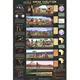 Laminated Human Evolution Educational Science Chart Poster Laminated Poster 24 X 36in