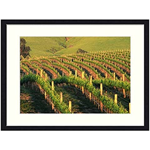 Ondate di Napa Vigneti in California, solida cornice in legno stampa Artistica (50,8x 35,6cm)