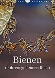 Bienen in ihrem geheimen Reich : Die Geheimnisse des Bienenstocks