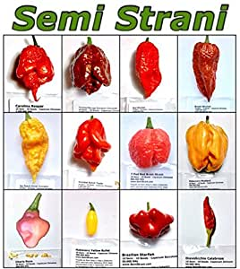 120 pure seeds in 12 varieties of the best and hottest - Best romanian pepper cultivars ...