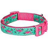 Blueberry Pet Pink Flamingo on Light Emerald Basic Dog Collar, Neck 19cm-25cm, X-Small, Collars for Dogs, Matching Lead & Harness Available Separately