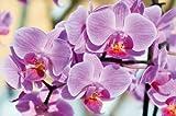 Poster Blumen Wandbild Dekoration Orchideen Natur Phalaenopsis Blüten Pflanze Knabenkraut Floristik Frühling Relax Wellness Spa | Wandposter Wanddeko Bild Wandgestaltung by GREAT ART (140 x 100 cm)