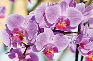 Orchidee FOTOMURALE - Orchidee fiori tappezzeria da parete- bei fiori quadro - XXL decorazione da parete 210 cm x 140 cm