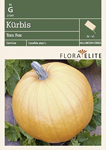 Flora Elite 21247 Kürbis Tom Fox (Kürbissamen)