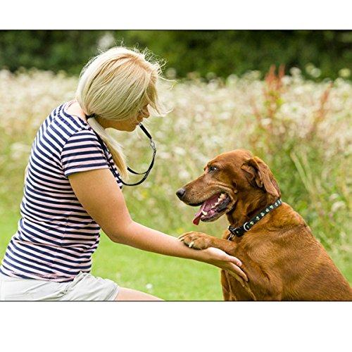 Zoom IMG-1 fretod fischietto cane e clicker