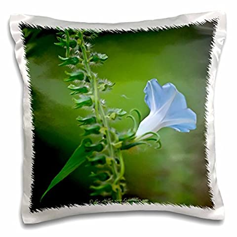 Lee Hiller Photography Hot Springs National Park Wildflowers - Heavely Blue Ivy Leaf Morning Glory Wildflower on North Mountain - 16x16 inch Pillow Case (pc_35728_1)