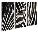 islandburner Bild Bilder auf Leinwand Zebra V2 XXL Poster Leinwandbild Wandbild Dekoartikel Wohnzimmer Marke
