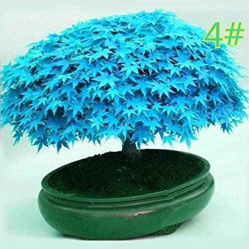 Junlinto, 20 Stücke Japanischen Ahorn Samen Bonsai DIY Pflanze Blumentopf Bunte Blätter Kreative Haushalt Haus Mini Gartenarbeit Decor 11