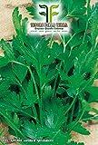 6000 Aprox- Semillas de perejil gigante de Nápoles - Petroselinum Crispum en envase original producido en Italia - Perejil gigante