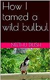 How I tamed a wild bulbul