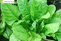 Splendour Seeds Palak Seeds Spinach - Around 100 Seeds