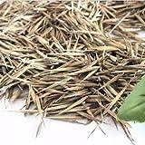 BigFamily 100 Stücke Tinwa Grün Phyllostachys Pubescens Moso-Bambus Samen Garten Bambus