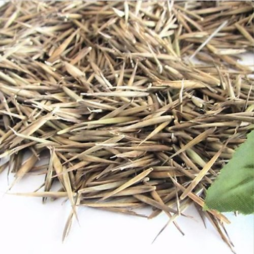 100 Pcs Vert Tinwa Phyllostachys Pubescens Moso-Bambou Graines Jardin Bambou