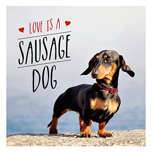 Love is a Sausage Dog (Gift Book) por Charlie Ellis