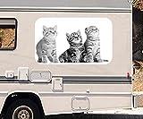 3D Autoaufkleber Katze Baby Kätzchen Tier Katzen schwarz weiß Wohnmobil Auto Fenster Motorhaube Sticker Aufkleber 21A302, Größe 3D sticker:ca. 45cmx27cm