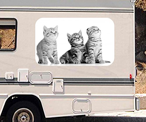 3d-autoaufkleber-katze-baby-katzchen-tier-katzen-schwarz-weiss-wohnmobil-auto-fenster-motorhaube-sti