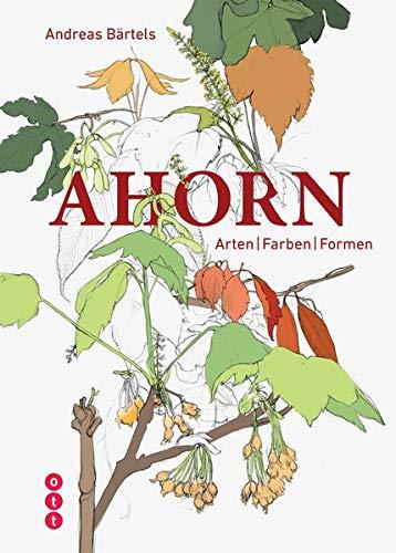 Ahorn: Arten | Farben | Formen