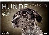 Uli Stein Hunde Portraits 2020 - Uli Stein