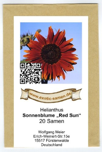 Sonnenblume 20 Samen (Sonnenblume - Red Sun - 20 Samen)