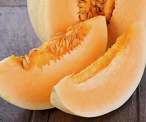 Bobby-Seeds BIO-Melonensamen Sweet Granite Honigmelone Portion