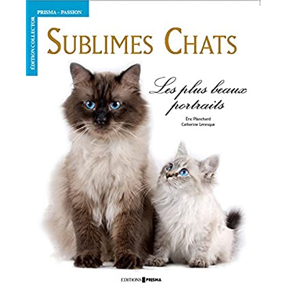 Sublimes chats : Les plus beaux portraits