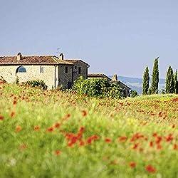 Artland Qualitätsbilder I Glasbilder Deko Glas Bilder 40 x 40 cm Botanik Blumenwiese Foto Bunt D8RC Toskanische rote Mohnblumen