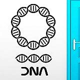 Pegatinas de pared de ADN Genealogía Biología Escuela de Química Adorno de Pared Ciencia Vinilo Tatuajes de Pared Etiqueta de la Decoración Del Hogar Sala de estar 42x68 cm