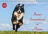 Berner Sennenhunde in Action (Tischkalender 2018 DIN A5 quer): Berner Sennenhunde, wie sie selten gezeigt werden - voller Temperament und Lebensfreude ... [Kalender] [Apr 01, 2017] Starick, Sigrid
