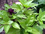 Kitchen Garden Hub - Superb Seeds Herb S...
