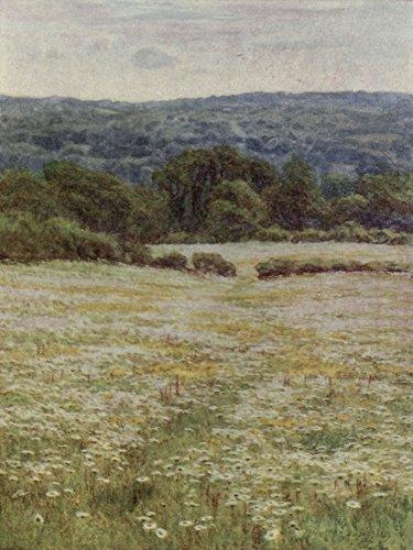 Helen Allingham – Happy England 1904 Ox-eye Daisies nr Westerham Kunstdruck (60,96 x 91,44 cm) (Eye Ox Daisy)