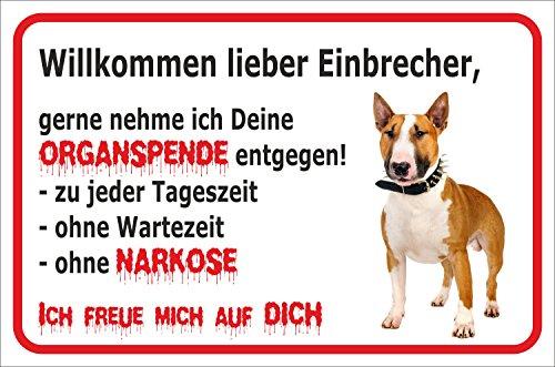 """Schild - Vorsicht Bullterrier \""""Einbrecher\""""(BRAUN/WEIß) (20x30cm)"""