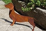 Edelrost Dackel Benji 3D 47 x 27 cm Hund Tierfigur Gartendekoration Rost