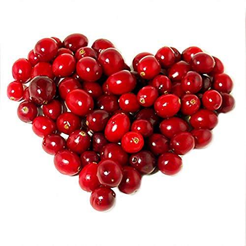 Wild Cherry Cranberry (KINGDUO Egrow50Pcs/Bag Wild Cranberry Seeds Vaccinium Cherry Bearberry Fruit Seeds Blueberry Garden Seeds)