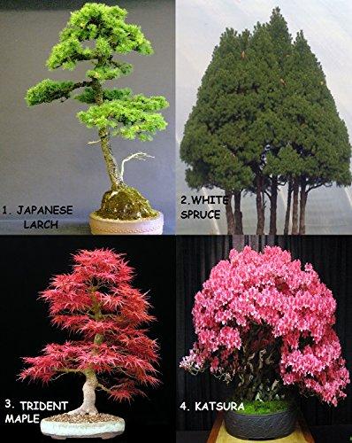 Bonsai énorme pack de 12 types d'arbres Plus de 120+ Seeds! Instruction rare + Growing