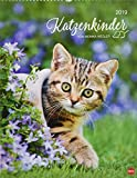 Katzenkinder Posterkalender - Kalender 2019