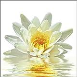 Artland Qualitätsbilder I Glasbilder Deko Glas Bilder 50 x 50 cm Botanik Blumen Seerose Foto Weiß A5LE Lotusblume schwimmt im Wasser