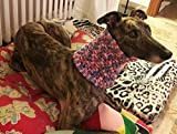 ScaldaCollo in Lana WHIPPET, GREYHOUND by CoccoLevrieri