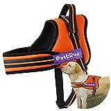 Hundegeschirr, PetLove weiche Leine gepolsterte No-Pull Hundegeschirr in allen Größen - XL, Orange