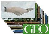 10-er Packung: Die 10 tierischsten GEO XXL-Postkarten +++ MIX Nr. 2 +++ von modern times