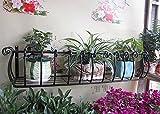 GAPHUAJIA cyjz® Blume Racks, Eisen Balkon Geländer Zaun im europäischen Stil Wohnzimmer Innen Wanddekoration Zum Aufhängen Blumentopf Rack Blume Regal korrosionsbeständig, Schwarz, 80*28*20cm