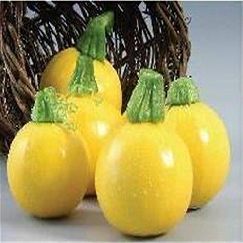 Kim graines de courgettes saines graines de légumes chaud 10seed