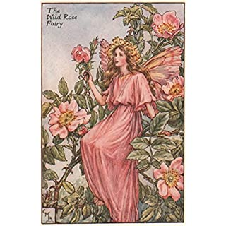 Wild Rose Fairy by Cicely Mary Barker. Summer Flower Fairies, old print c1935