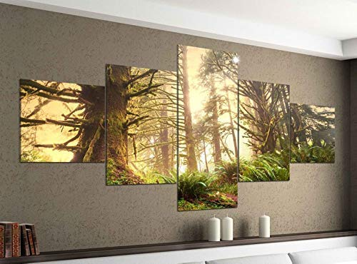 Acrylglasbilder 5 Teilig 200x100cm Dschungel Regenwald Wald Sonne Druck Acrylbild Acryl Acrylglas Bilder Bild 14F761