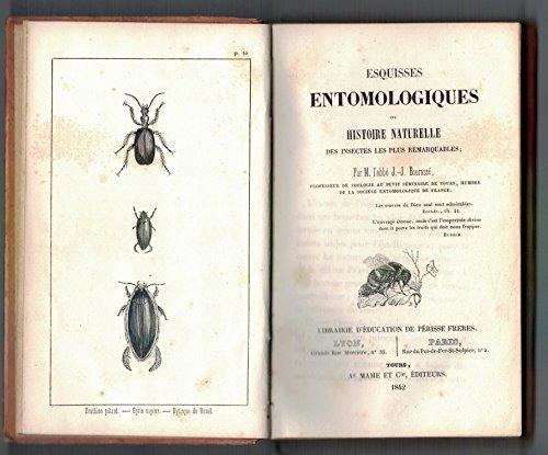Esquisses entomologiques ou Histoire naturelle des insectes les plus remarquables
