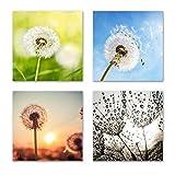 Pusteblume Set B schwebend, 4-teiliges Blumen Bilder-Set jedes Teil 29x29cm, Seidenmatte Optik auf Forex Fine Art, moderne Optik, UV-stabil, wasserfest, Kunstdruck für Büro, Wohnzimmer, XXL Deko Bild