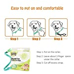 best tick collar for small, medium and large dogs, waterproof, natural flea and tick protection last for 3 months Best Tick Collar for Small, Medium and Large Dogs, Waterproof, Natural Flea And Tick Protection Last for 3 Months 51zbzQwxwVL