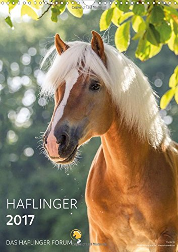 haflinger-horses-2017-by-das-haflinger-forum-2017-the-only-haflinger-calendar-which-is-as-polyvalent
